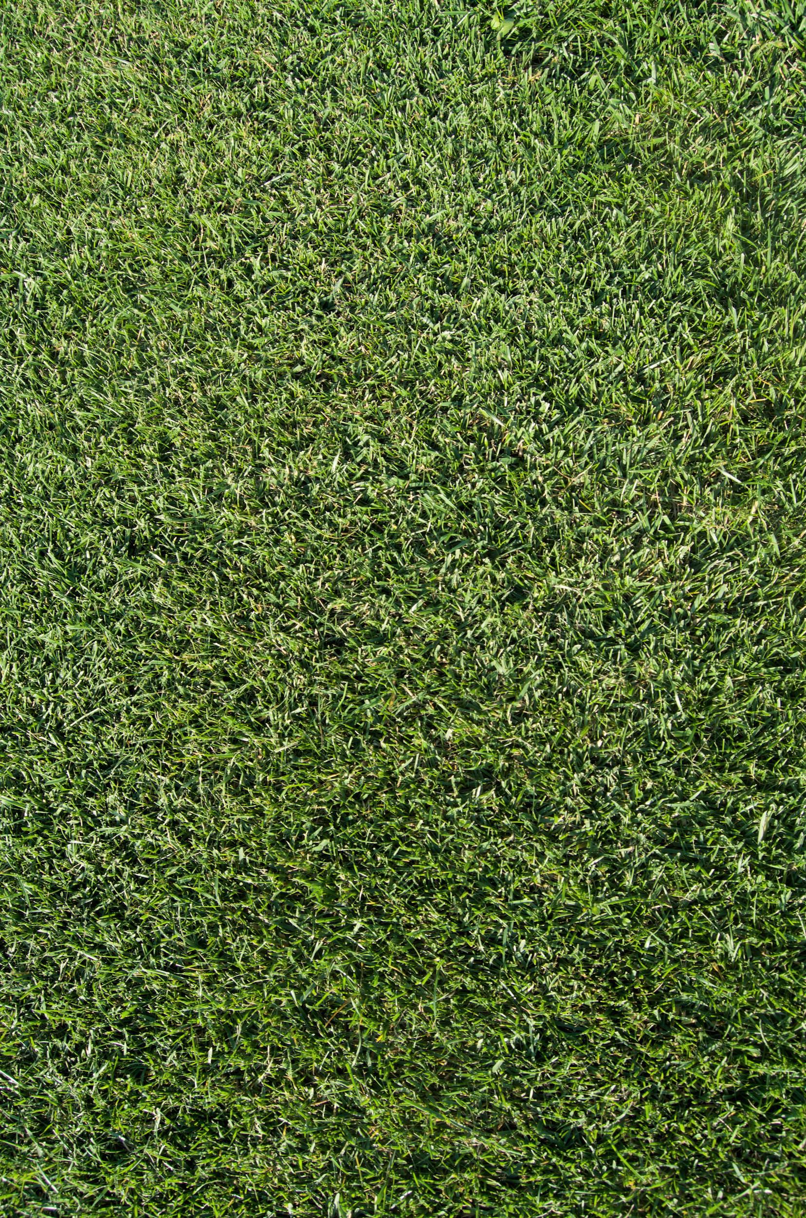 Tappeto erboso sandher rustico tappet erbosi e vivaio for Aspetto rustico